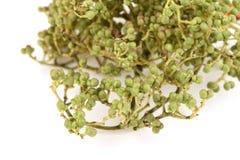 Φρούτα και λαχανικά γωνιών kurzii Broussonetia Στοκ Εικόνες