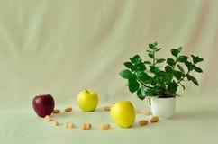 Φρούτα και λουλούδι στο πράσινο υπόβαθρο Στοκ Φωτογραφίες
