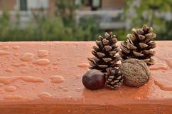 Φρούτα και σταγόνες βροχής φθινοπώρου Στοκ εικόνες με δικαίωμα ελεύθερης χρήσης