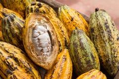 Φρούτα κακάου, ακατέργαστα φασόλια κακάου, λοβός κακάου στο ξύλινο υπόβαθρο Στοκ φωτογραφίες με δικαίωμα ελεύθερης χρήσης