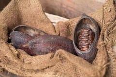 Φρούτα κακάου, ακατέργαστα φασόλια κακάου, λοβός κακάου στο ξύλινο υπόβαθρο Στοκ φωτογραφία με δικαίωμα ελεύθερης χρήσης