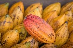 Φρούτα κακάου, ακατέργαστα φασόλια κακάου, υπόβαθρο λοβών κακάου Στοκ φωτογραφίες με δικαίωμα ελεύθερης χρήσης