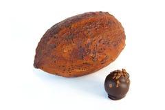 Φρούτα κακάου Στοκ φωτογραφία με δικαίωμα ελεύθερης χρήσης