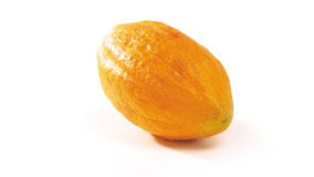 Φρούτα κακάου Στοκ Εικόνα