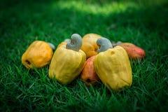 Φρούτα & καρύδια Στοκ εικόνα με δικαίωμα ελεύθερης χρήσης