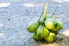 Φρούτα καρύδων Στοκ φωτογραφία με δικαίωμα ελεύθερης χρήσης