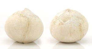 Φρούτα καρύδων Στοκ Εικόνες