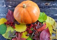 Φρούτα κολοκύθας και ντοματών στα σκοτεινά ξύλινα φύλλα υποβάθρου και φθινοπώρου μετά από στενό επάνω βροχής στοκ εικόνες