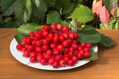 Φρούτα κραταίγου σε ένα πιάτο Στοκ Εικόνες