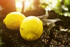 Φρούτα λεμονιών, νωποί καρποί, υγιή τρόφιμα, υπόβαθρο Bokeh στοκ εικόνα