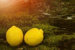 Φρούτα λεμονιών, νωποί καρποί, υγιή τρόφιμα, υπόβαθρο Bokeh στοκ εικόνα με δικαίωμα ελεύθερης χρήσης