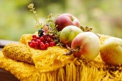 φρούτα με τα λουλούδια και τα μούρα μήλων Στοκ Εικόνα