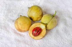 Φρούτα μοσχοκάρυδου στοκ φωτογραφίες με δικαίωμα ελεύθερης χρήσης