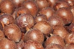 Φρούτα μουσμουλιών Στοκ φωτογραφίες με δικαίωμα ελεύθερης χρήσης