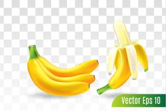Φρούτα μπανανών στο διαφανές υπόβαθρο, τρισδιάστατο ρεαλιστικό διάνυσμα απεικόνιση αποθεμάτων