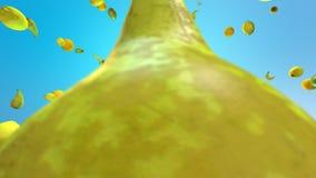 Φρούτα που ταλαντεύονται στο διάστημα απόθεμα βίντεο