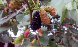 Φρούτα που τρώνε Στοκ Φωτογραφία