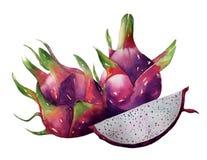 Φρούτα δράκων, φωτεινό χρώμα συρμένο χέρι διανυσματικό ο watercolor pitaya Στοκ Φωτογραφίες