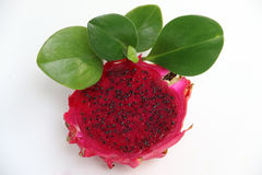 Φρούτα δράκων Στοκ Εικόνες