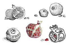 Φρούτα ροδιών στο γραφικό ύφος που απομονώνεται στο άσπρο υπόβαθρο Σχέδιο των επιλογών, κάρτες, υπόβαθρα, πρότυπα, ετικέτες απεικόνιση αποθεμάτων
