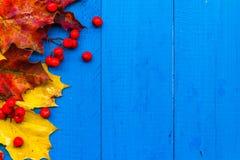 Φρούτα σορβιών φύλλων χρώματος υποβάθρου πτώσης στους μπλε πίνακες Στοκ Φωτογραφία