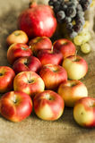 Φρούτα σταφυλιών, ροδιών και μήλων φθινοπώρου στο υπόβαθρο μαλλιού Στοκ Φωτογραφία
