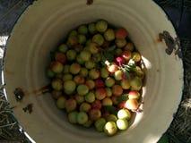 _ Φρούτα στον κάδο Στοκ φωτογραφία με δικαίωμα ελεύθερης χρήσης