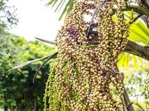 Φρούτα στο δέντρο Στοκ φωτογραφία με δικαίωμα ελεύθερης χρήσης