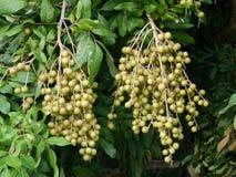 Φρούτα στο δέντρο στοκ φωτογραφίες