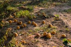 Φρούτα στο έδαφος Στοκ φωτογραφίες με δικαίωμα ελεύθερης χρήσης