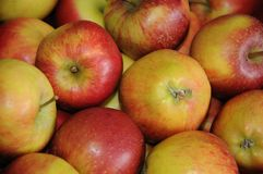 Φρούτα της Apple για την πώληση στην Κοπεγχάγη Στοκ Εικόνα
