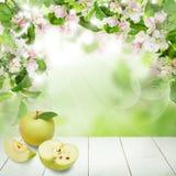Φρούτα της Apple με τα πράσινα φύλλα και τα λουλούδια Στοκ εικόνες με δικαίωμα ελεύθερης χρήσης
