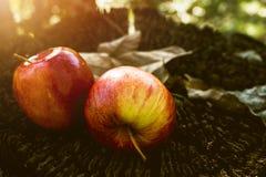 Φρούτα της Apple, νωποί καρποί, υγιή τρόφιμα, ξύλινος πίνακας στοκ φωτογραφία με δικαίωμα ελεύθερης χρήσης
