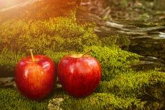 Φρούτα της Apple, νωποί καρποί, υγιή τρόφιμα, υπόβαθρο βρύου στοκ φωτογραφία