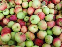 Φρούτα της Apple Στοκ Φωτογραφίες