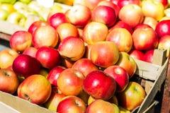 Φρούτα της Apple Healty Στοκ Εικόνες