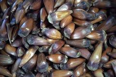 Φρούτα του βραζιλιάνου πεύκου στην αγορά οδών Στοκ Εικόνες