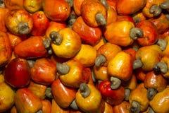 Φρούτα των δυτικών ανακαρδίων στοκ φωτογραφία με δικαίωμα ελεύθερης χρήσης