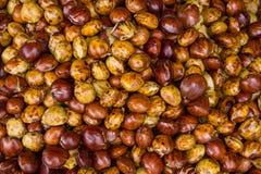 Φρούτα φασολιών Djenkol Στοκ Εικόνα