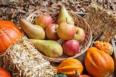 Φρούτα φθινοπώρου Στοκ Εικόνα