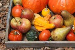 Φρούτα φθινοπώρου Στοκ Εικόνες