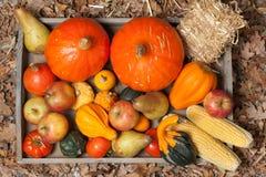 Φρούτα φθινοπώρου Στοκ φωτογραφία με δικαίωμα ελεύθερης χρήσης