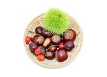 Φρούτα φθινοπώρου Στοκ εικόνες με δικαίωμα ελεύθερης χρήσης