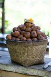 Φρούτα φιδιών Στοκ Φωτογραφίες