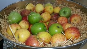 Φρούτα Στοκ Εικόνα