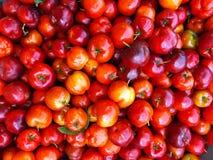 Φρούτα Acerola Στοκ Φωτογραφίες