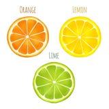 Φρούτα Citruis Watercolor Στοκ φωτογραφίες με δικαίωμα ελεύθερης χρήσης