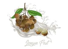 Φρούτα Longan στον παφλασμό χυμών Στοκ Φωτογραφίες