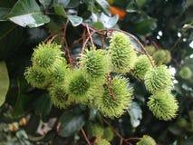 Φρούτα Rambutan Στοκ φωτογραφία με δικαίωμα ελεύθερης χρήσης