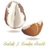 Φρούτα Salak/φιδιών Στοκ φωτογραφίες με δικαίωμα ελεύθερης χρήσης